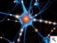 Работа нейронов мозга
